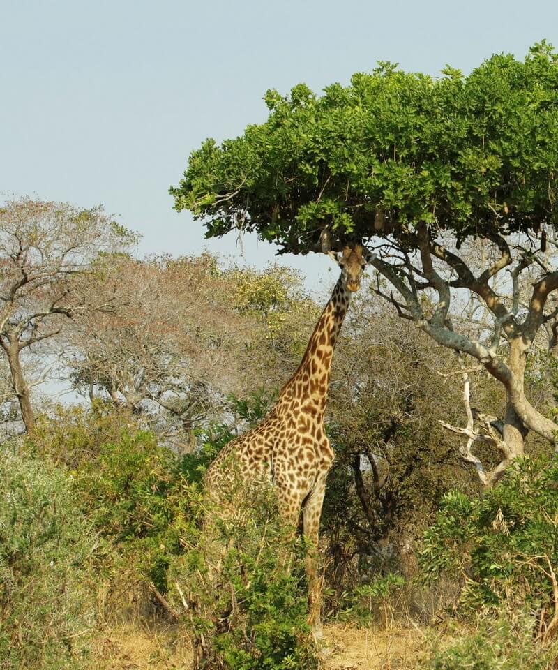 Nyika Discovery - Tarangire national park, lake Manyara and Ngorongoro crater - 3 days