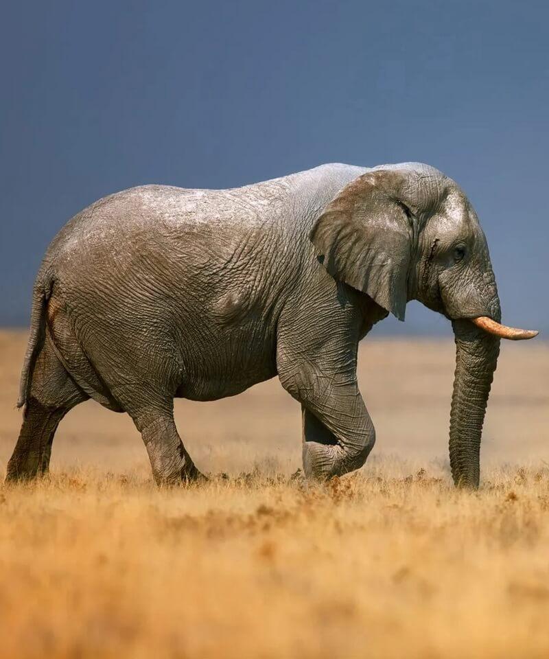 Nyika Discovery - Tarangire national park, Serengeti national park and Ngorongoro conservation area - 5 days