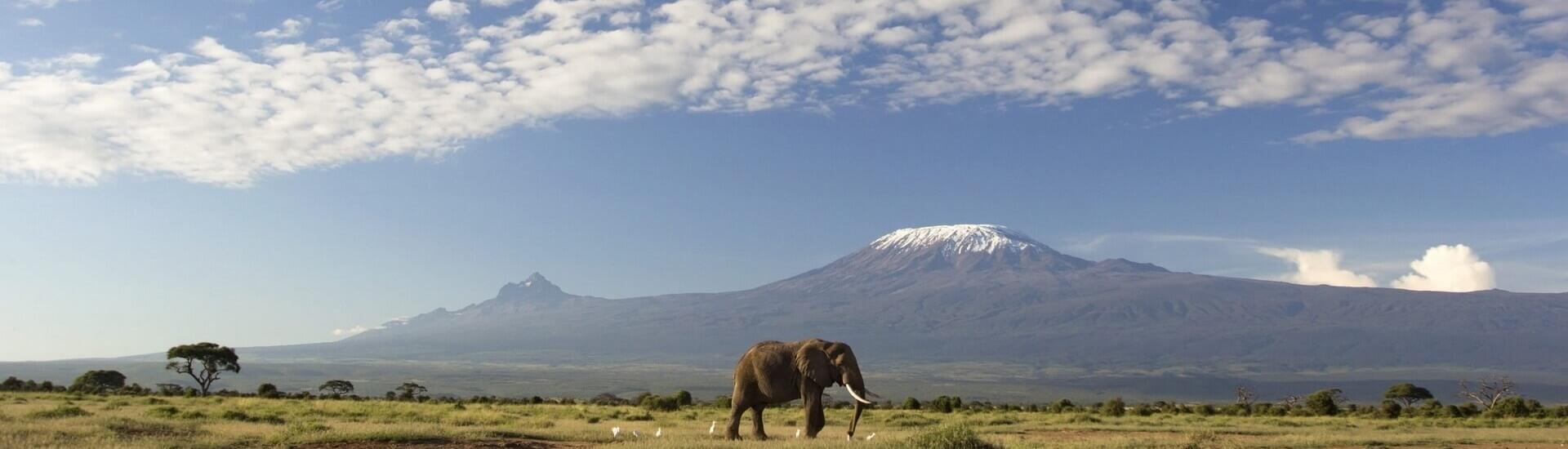 Nyika Discovery, Tanzania - Contact us