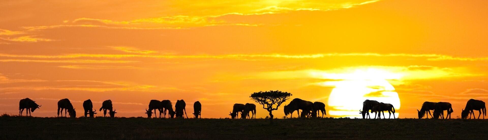 Nyika Discovery - Tanzania treks and tours - What to do